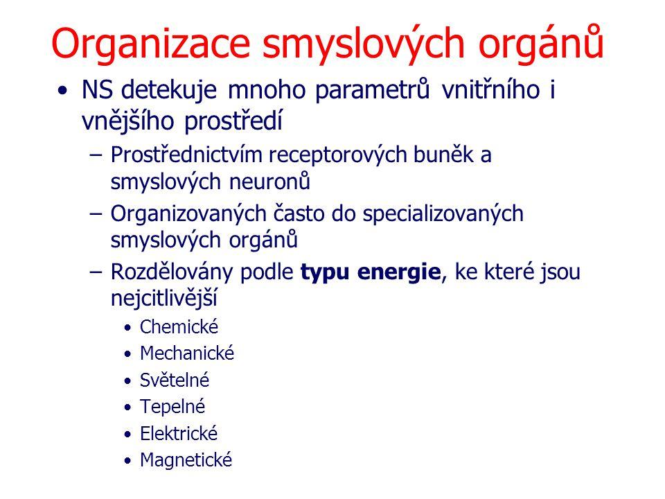 Organizace smyslových orgánů NS detekuje mnoho parametrů vnitřního i vnějšího prostředí –Prostřednictvím receptorových buněk a smyslových neuronů –Org