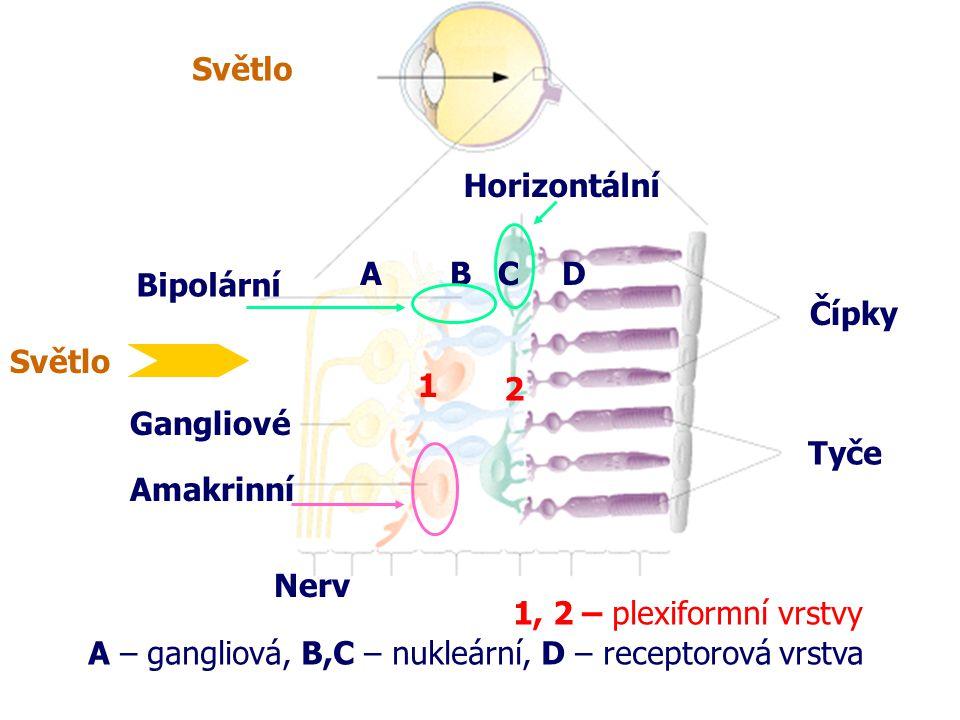 Světlo Horizontální Bipolární Gangliové Amakrinní Nerv 1 2 1, 2 – plexiformní vrstvy Tyče Čípky ABCD A – gangliová, B,C – nukleární, D – receptorová v