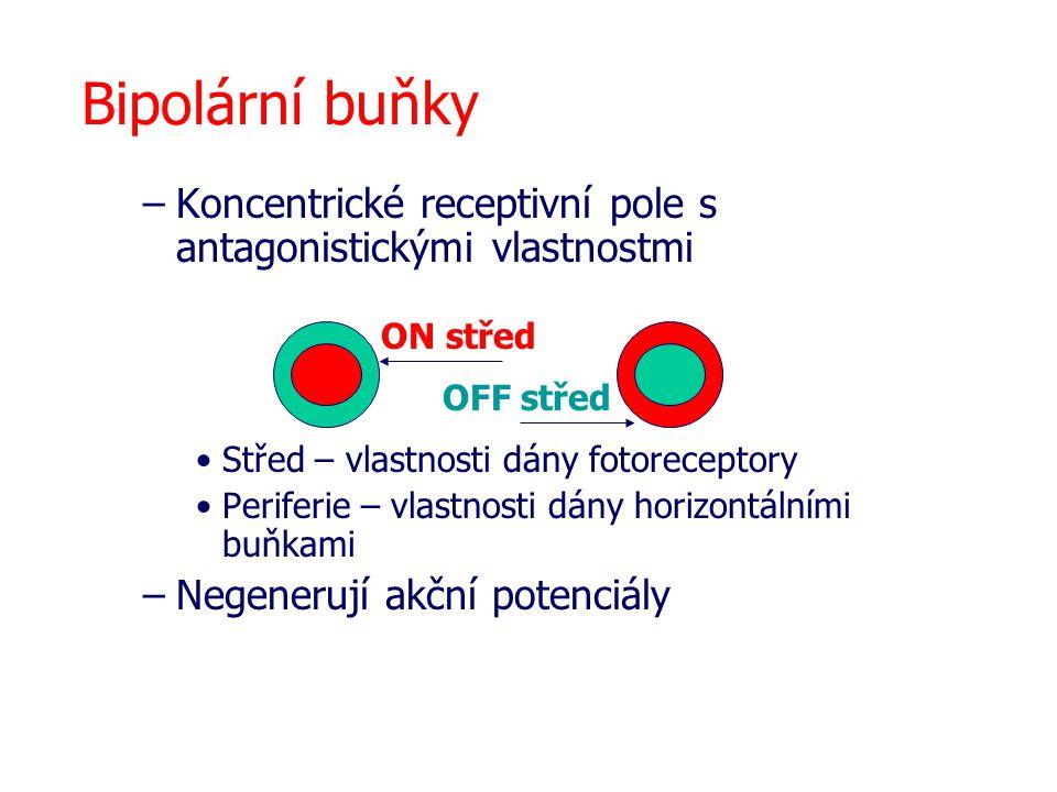 Bipolární buňky –Koncentrické receptivní pole s antagonistickými vlastnostmi Střed – vlastnosti dány fotoreceptory Periferie – vlastnosti dány horizon