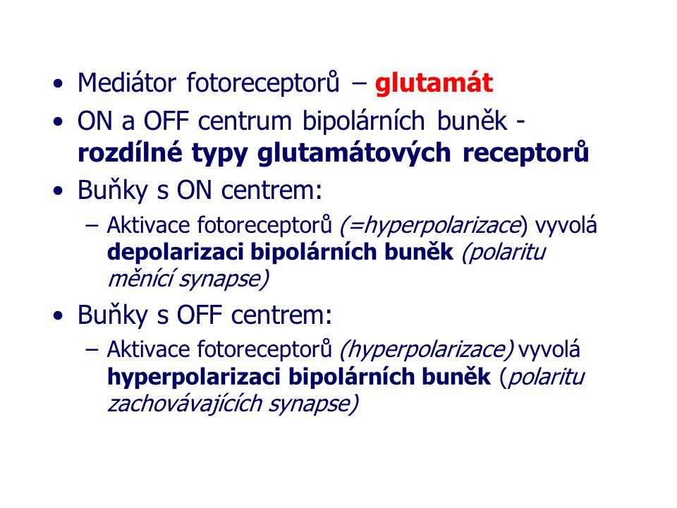 Mediátor fotoreceptorů – glutamát ON a OFF centrum bipolárních buněk - rozdílné typy glutamátových receptorů Buňky s ON centrem: –Aktivace fotorecepto