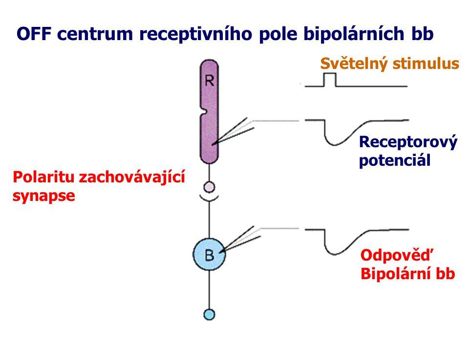 OFF centrum receptivního pole bipolárních bb Polaritu zachovávající synapse Světelný stimulus Receptorový potenciál Odpověď Bipolární bb