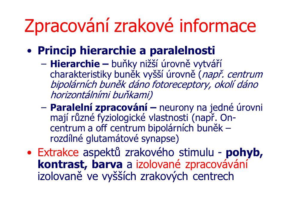 Zpracování zrakové informace Princip hierarchie a paralelnosti –Hierarchie – buňky nižší úrovně vytváří charakteristiky buněk vyšší úrovně (např. cent