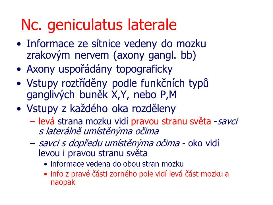 Nc. geniculatus laterale Informace ze sítnice vedeny do mozku zrakovým nervem (axony gangl. bb) Axony uspořádány topograficky Vstupy roztříděny podle