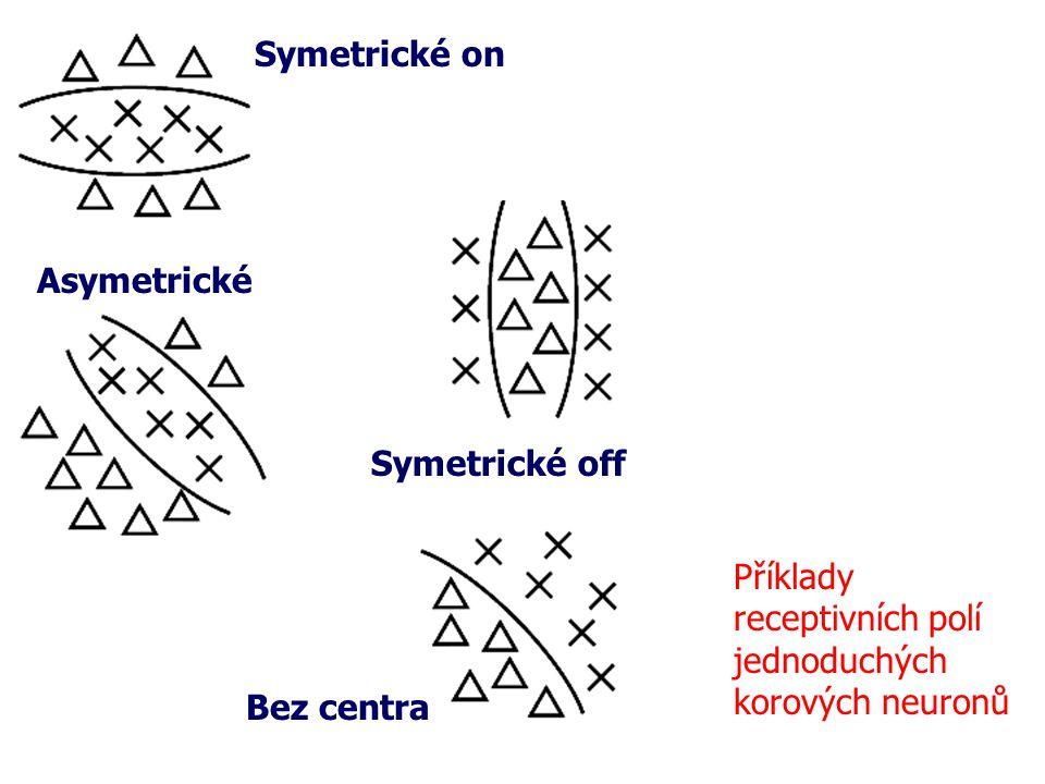 Příklady receptivních polí jednoduchých korových neuronů Symetrické on Asymetrické Symetrické off Bez centra