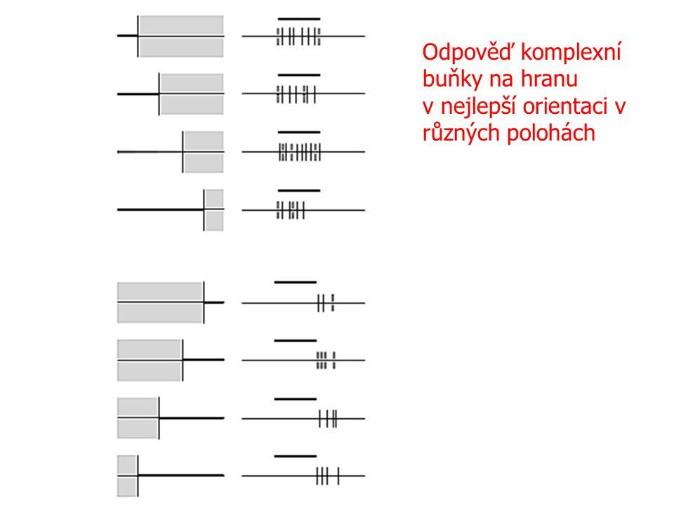 Odpověď komplexní buňky na hranu v nejlepší orientaci v různých polohách