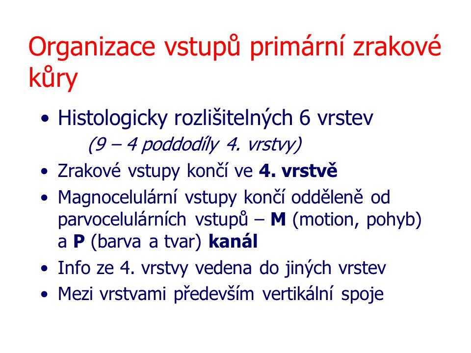 Organizace vstupů primární zrakové kůry Histologicky rozlišitelných 6 vrstev (9 – 4 poddodíly 4. vrstvy) Zrakové vstupy končí ve 4. vrstvě Magnocelulá