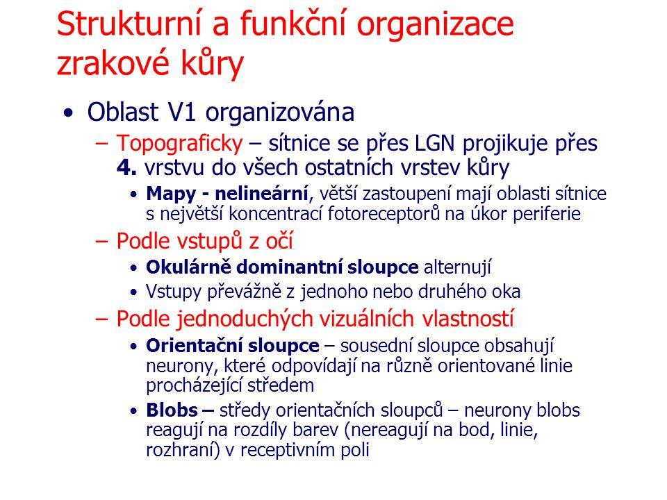 Strukturní a funkční organizace zrakové kůry Oblast V1 organizována –Topograficky – sítnice se přes LGN projikuje přes 4. vrstvu do všech ostatních vr