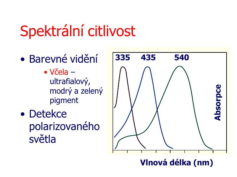 Spektrální citlivost Barevné vidění Včela – ultrafialový, modrý a zelený pigment Detekce polarizovaného světla 335 435540 Vlnová délka (nm) Absorpce