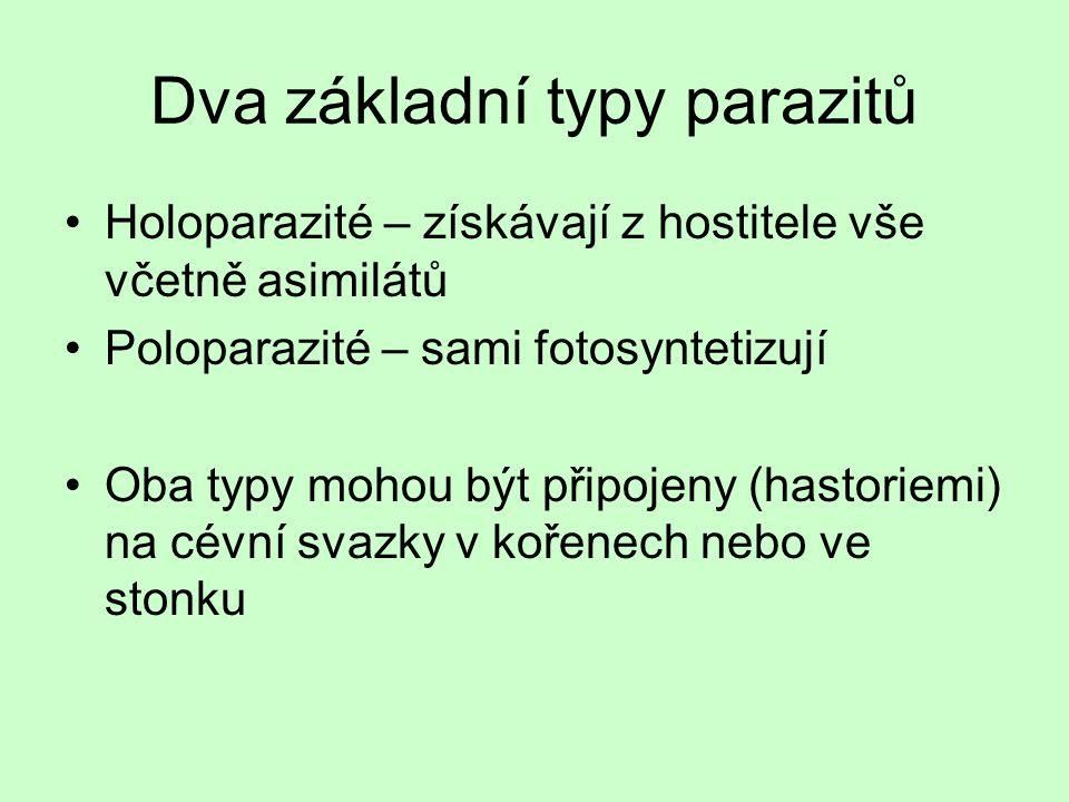 Dva základní typy parazitů Holoparazité – získávají z hostitele vše včetně asimilátů Poloparazité – sami fotosyntetizují Oba typy mohou být připojeny