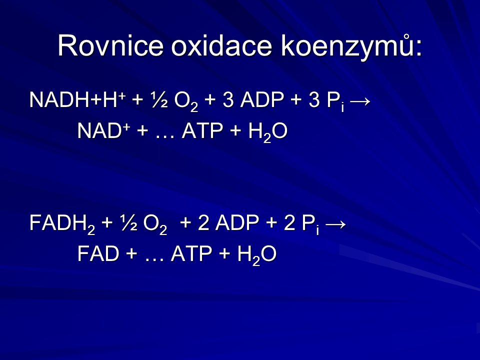 Rovnice oxidace koenzymů: NADH+H + + ½ O 2 + 3 ADP + 3 P i → NAD + + … ATP + H 2 O FADH 2 + ½ O 2 + 2 ADP + 2 P i → FAD + … ATP + H 2 O