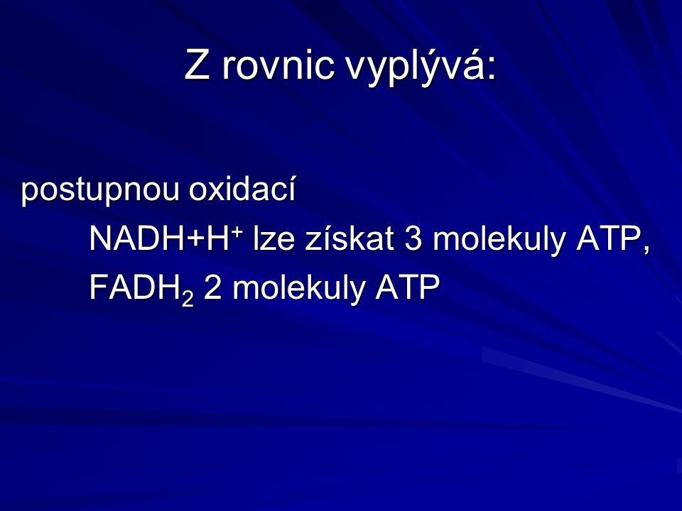 Z rovnic vyplývá: postupnou oxidací NADH+H + lze získat 3 molekuly ATP, FADH 2 2 molekuly ATP