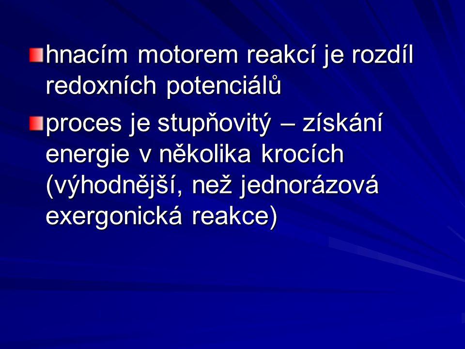 hnacím motorem reakcí je rozdíl redoxních potenciálů proces je stupňovitý – získání energie v několika krocích (výhodnější, než jednorázová exergonická reakce)