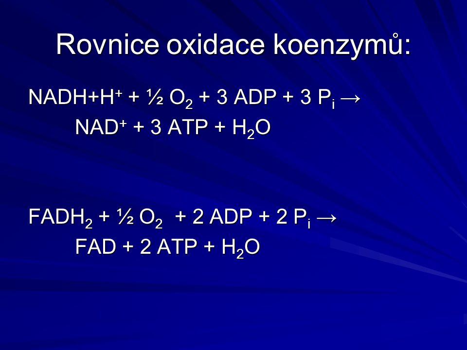 Rovnice oxidace koenzymů: NADH+H + + ½ O 2 + 3 ADP + 3 P i → NAD + + 3 ATP + H 2 O FADH 2 + ½ O 2 + 2 ADP + 2 P i → FAD + 2 ATP + H 2 O