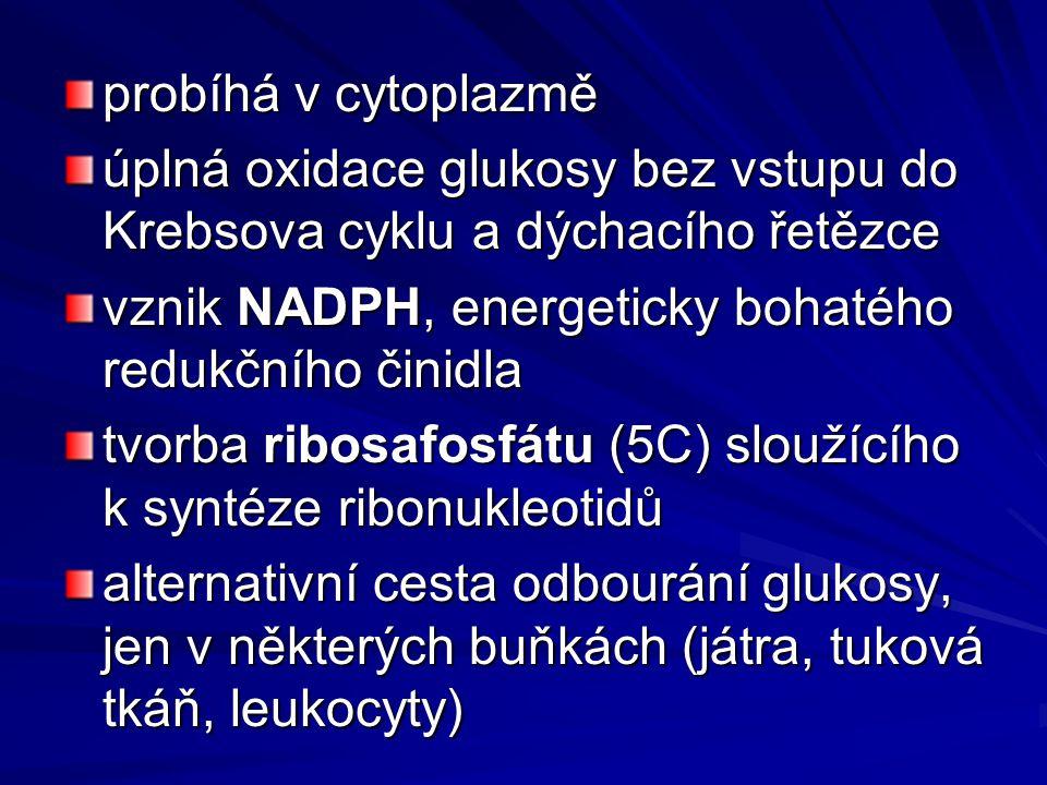 probíhá v cytoplazmě úplná oxidace glukosy bez vstupu do Krebsova cyklu a dýchacího řetězce vznik NADPH, energeticky bohatého redukčního činidla tvorba ribosafosfátu (5C) sloužícího k syntéze ribonukleotidů alternativní cesta odbourání glukosy, jen v některých buňkách (játra, tuková tkáň, leukocyty)