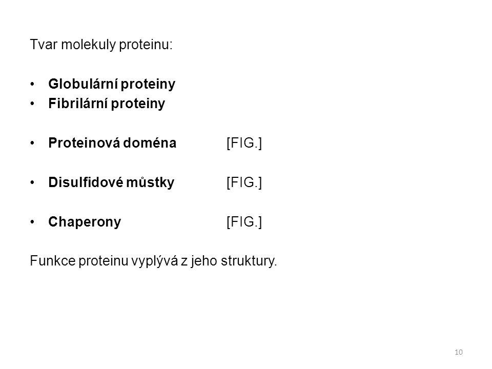Tvar molekuly proteinu: Globulární proteiny Fibrilární proteiny Proteinová doména[FIG.] Disulfidové můstky[FIG.] Chaperony[FIG.] Funkce proteinu vyplý