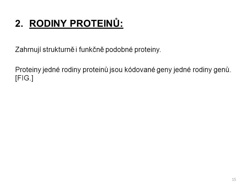 2.RODINY PROTEINŮ: Zahrnují strukturně i funkčně podobné proteiny. Proteiny jedné rodiny proteinů jsou kódované geny jedné rodiny genů. [FIG.] 15