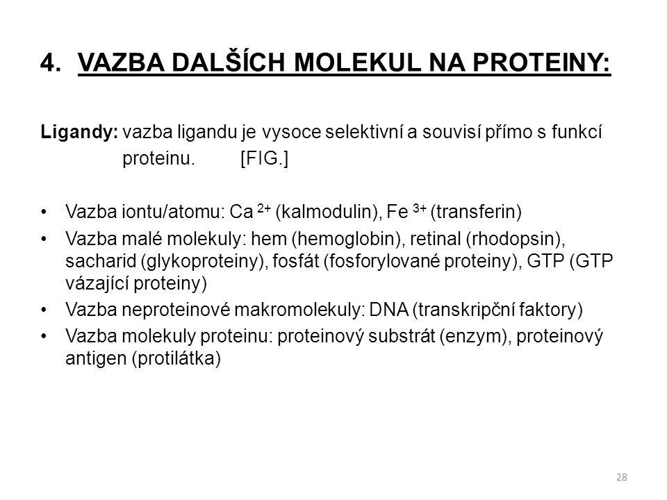 4.VAZBA DALŠÍCH MOLEKUL NA PROTEINY: Ligandy: vazba ligandu je vysoce selektivní a souvisí přímo s funkcí proteinu.[FIG.] Vazba iontu/atomu: Ca 2+ (ka