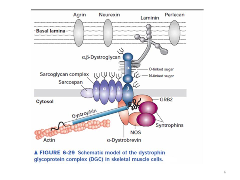 2.RODINY PROTEINŮ: Zahrnují strukturně i funkčně podobné proteiny.