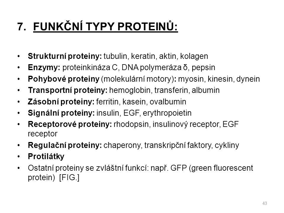 7.FUNKČNÍ TYPY PROTEINŮ: Strukturní proteiny: tubulin, keratin, aktin, kolagen Enzymy: proteinkináza C, DNA polymeráza δ, pepsin Pohybové proteiny (mo