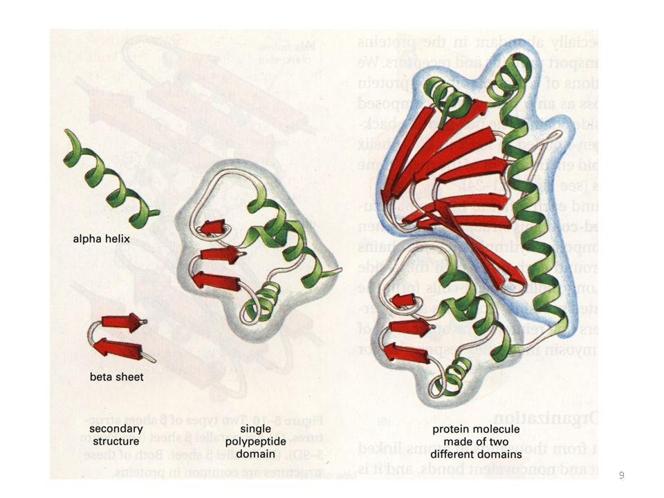 4.VAZBA DALŠÍCH MOLEKUL NA PROTEINY: Ligandy: vazba ligandu je vysoce selektivní a souvisí přímo s funkcí proteinu.[FIG.] Vazba iontu/atomu: Ca 2+ (kalmodulin), Fe 3+ (transferin) Vazba malé molekuly: hem (hemoglobin), retinal (rhodopsin), sacharid (glykoproteiny), fosfát (fosforylované proteiny), GTP (GTP vázající proteiny) Vazba neproteinové makromolekuly: DNA (transkripční faktory) Vazba molekuly proteinu: proteinový substrát (enzym), proteinový antigen (protilátka) 30