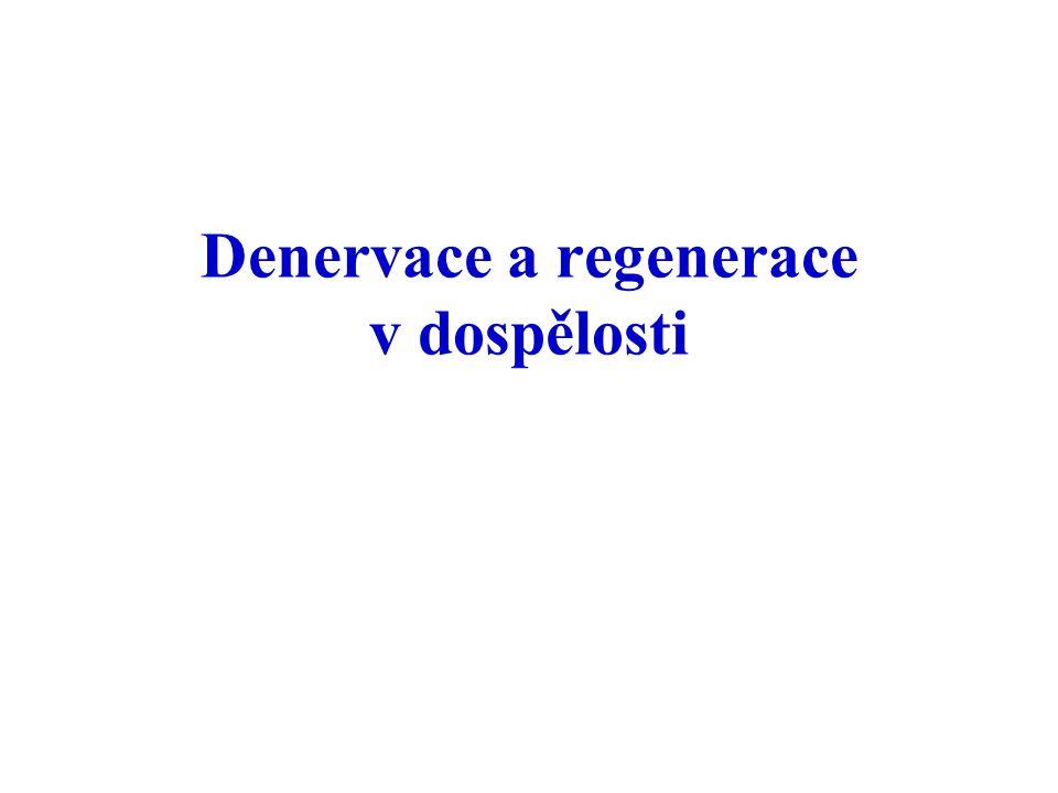 Denervace a regenerace v dospělosti