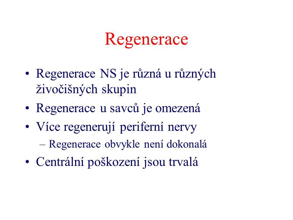 Regenerace Regenerace NS je různá u různých živočišných skupin Regenerace u savců je omezená Více regenerují periferní nervy –Regenerace obvykle není dokonalá Centrální poškození jsou trvalá