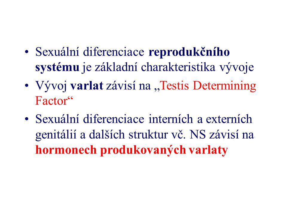 Mozek prodělává hormonálně závislou sexuální diferenciaci Hormony gonád mají –Permanentní vliv na vyvíjející se CNS a –Přechodný vliv na dospělý mozek Testosteron často označován za samčí sexuální hormon, Estrogen a progesteron za samičí Ve skutečnosti však každé pohlaví má specifickou kombinaci –Působení steroidních hormonů Prostřednictvím steroidních receptorů – aktivace či inhibice genů Přímý vliv na membránu