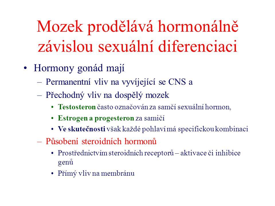 Mozek prodělává hormonálně závislou sexuální diferenciaci Hormony gonád mají –Permanentní vliv na vyvíjející se CNS a –Přechodný vliv na dospělý mozek