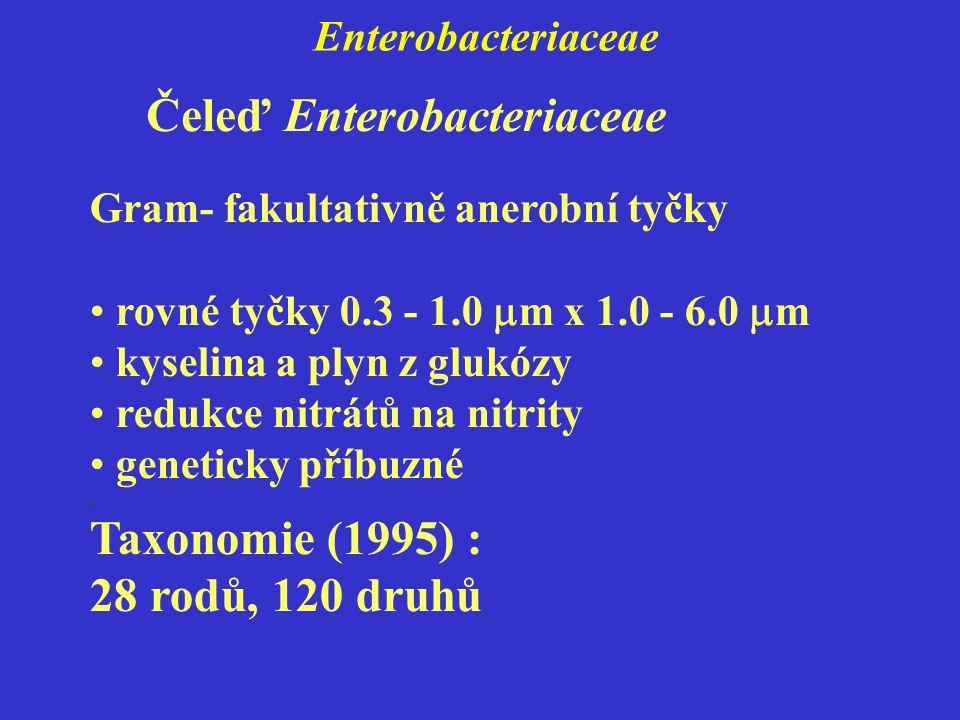 Enterobacteriaceae Gram- fakultativně anerobní tyčky rovné tyčky 0.3 - 1.0  m x 1.0 - 6.0  m kyselina a plyn z glukózy redukce nitrátů na nitrity geneticky příbuzné, Taxonomie (1995) : 28 rodů, 120 druhů Čeleď Enterobacteriaceae