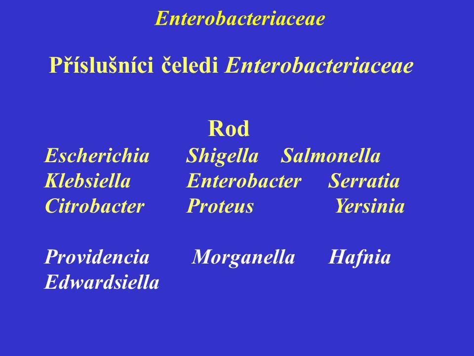 Enterobacteriaceae Rod EscherichiaShigellaSalmonella KlebsiellaEnterobacterSerratia CitrobacterProteus Yersinia Providencia Morganella Hafnia Edwardsiella Příslušníci čeledi Enterobacteriaceae