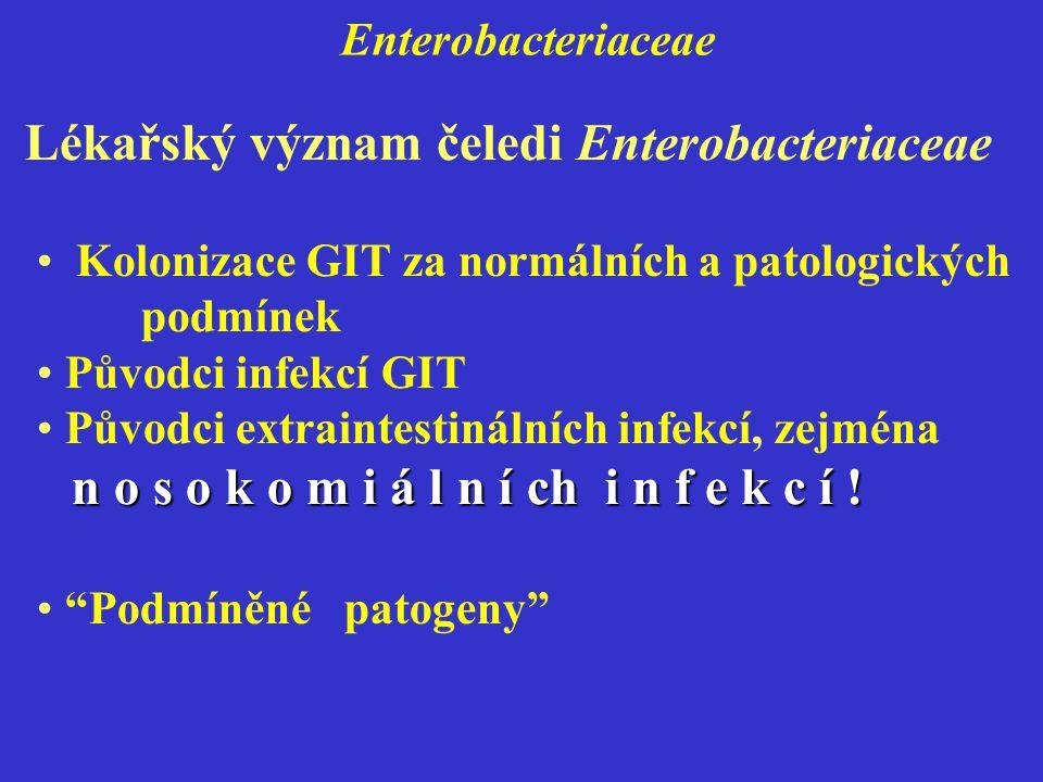 Enterobacteriaceae Kolonizace GIT za normálních a patologických podmínek Původci infekcí GIT n o s o k o m i á l n í ch i n f e k c í .
