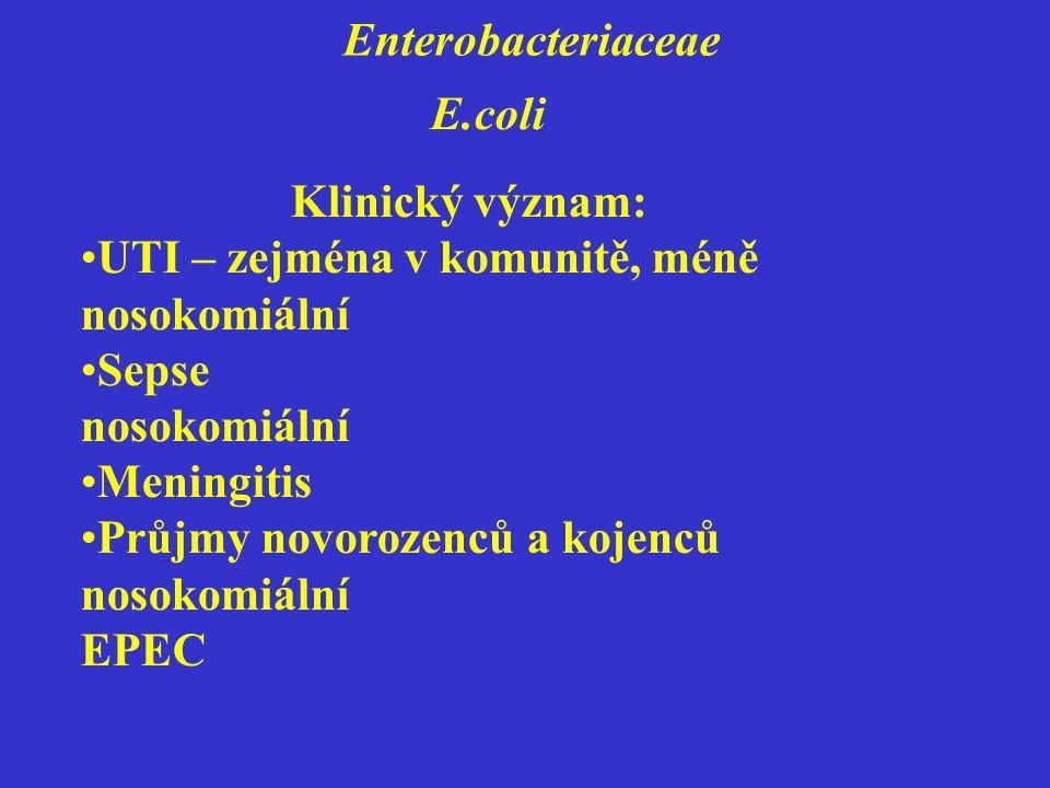 Enterobacteriaceae E.coli Klinický význam: UTI – zejména v komunitě, méně nosokomiální Sepse nosokomiální Meningitis Průjmy novorozenců a kojenců nosokomiální EPEC