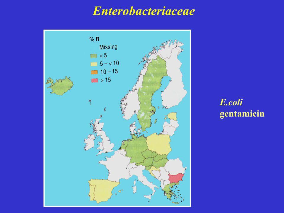 Enterobacteriaceae E.coli gentamicin