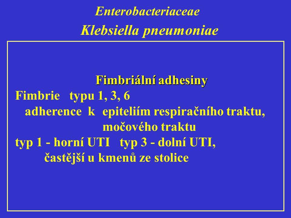 Enterobacteriaceae Klebsiella pneumoniae Fimbriální adhesiny Fimbrie typu 1, 3, 6 adherence k epiteliím respiračního traktu, močového traktu typ 1 - horní UTI typ 3 - dolní UTI, častější u kmenů ze stolice