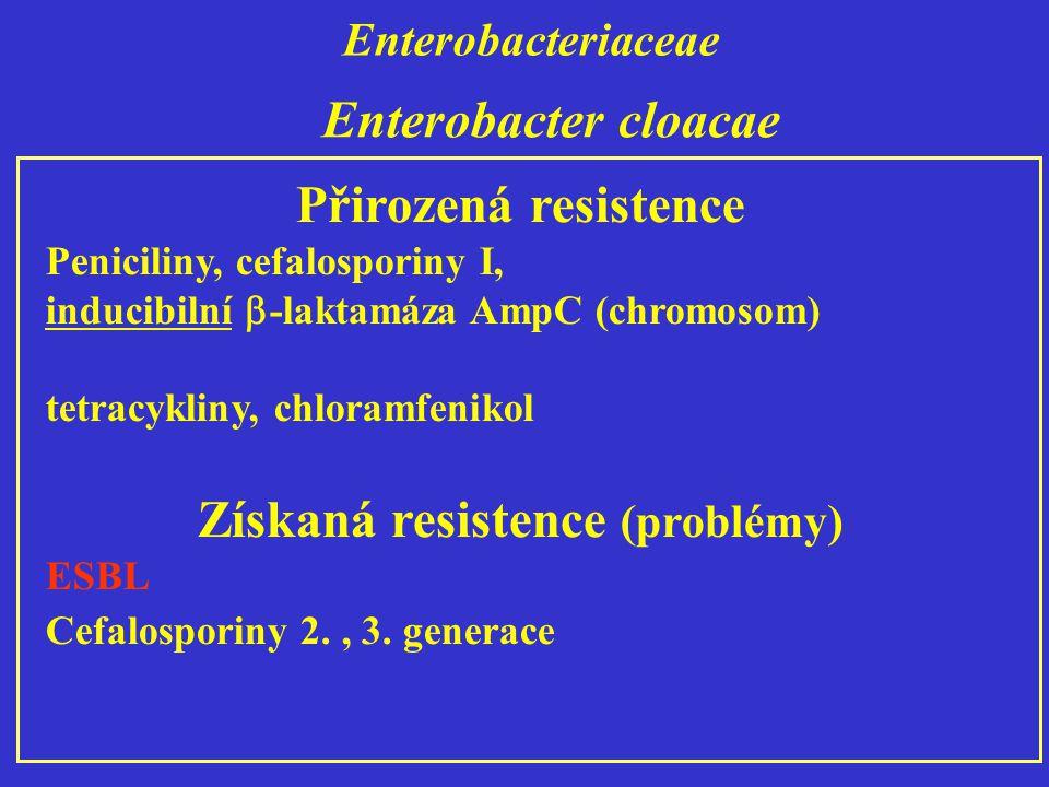 Enterobacteriaceae Přirozená resistence Peniciliny, cefalosporiny I, inducibilní  -laktamáza AmpC (chromosom) tetracykliny, chloramfenikol Získaná resistence (problémy) ESBL Cefalosporiny 2., 3.