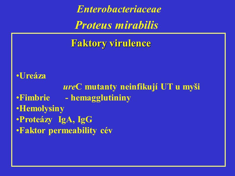 Enterobacteriaceae Proteus mirabilis Faktory virulence Ureáza ureC mutanty neinfikují UT u myši Fimbrie - hemagglutininy Hemolysiny Proteázy IgA, IgG Faktor permeability cév
