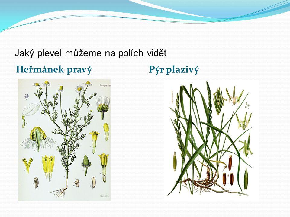 Kladný a záporný význam plevelů Negativní význam Plevele mohou ochuzovat polní plodiny o vodu, půdu o půdní vzduch a o živiny. Snižují teplotu půdy, z