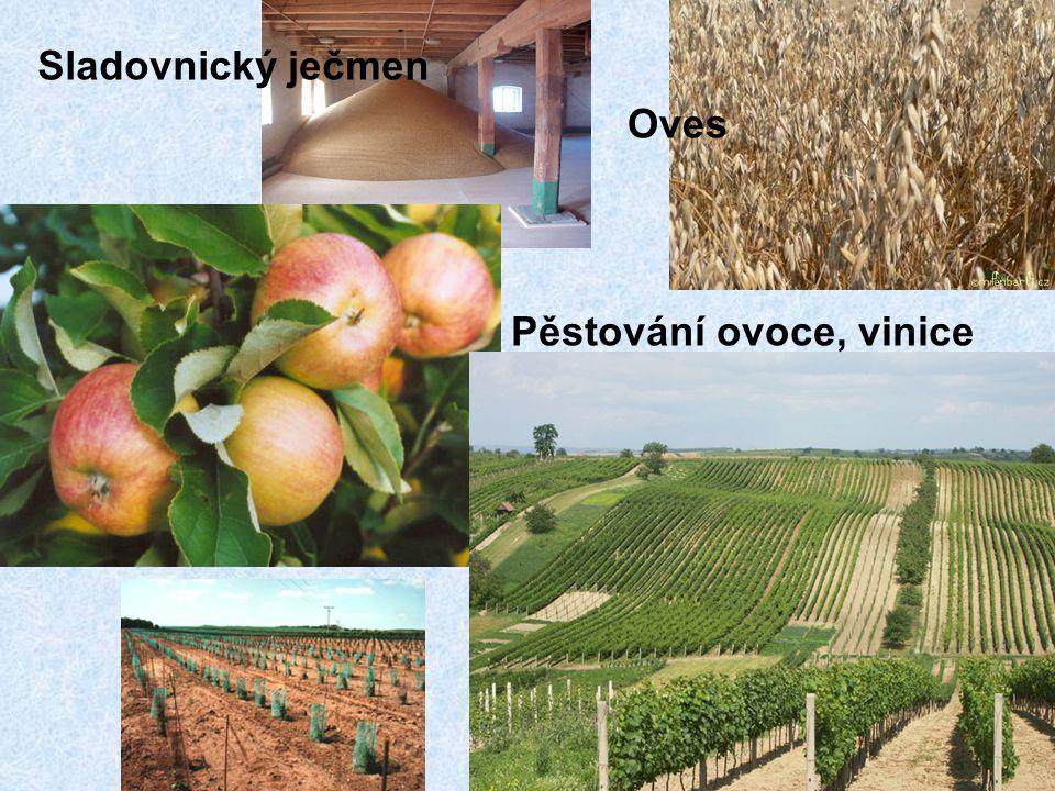 Sladovnický ječmen Oves Pěstování ovoce, vinice
