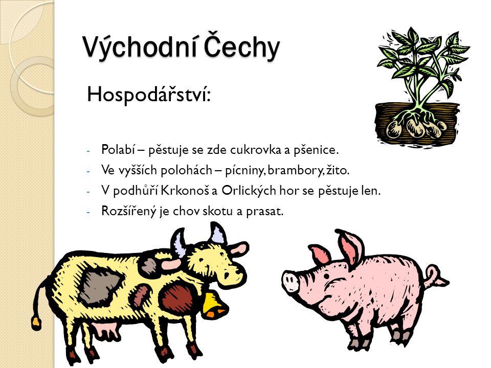 Východní Čechy Hospodářství: - Polabí – pěstuje se zde cukrovka a pšenice. - Ve vyšších polohách – pícniny, brambory, žito. - V podhůří Krkonoš a Orli