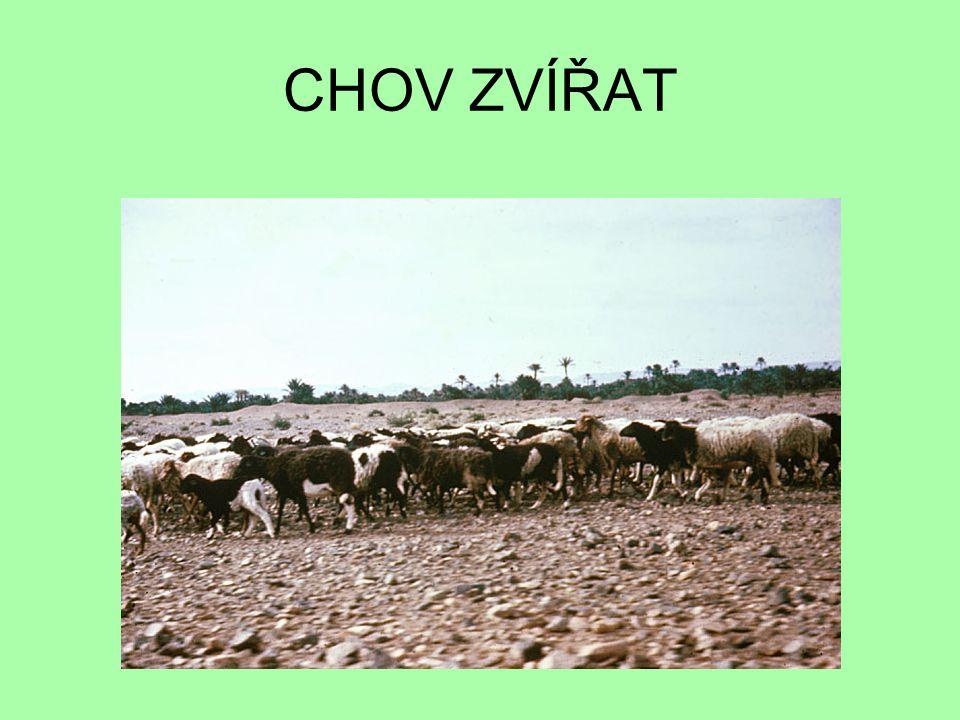 kozy skot velbloudi ovce buvoli prasata OBLAST SAHARY