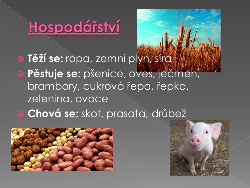  Těží se: ropa, zemní plyn, síra  Pěstuje se: pšenice, oves, ječmen, brambory, cukrová řepa, řepka, zelenina, ovoce  Chová se: skot, prasata, drůbe