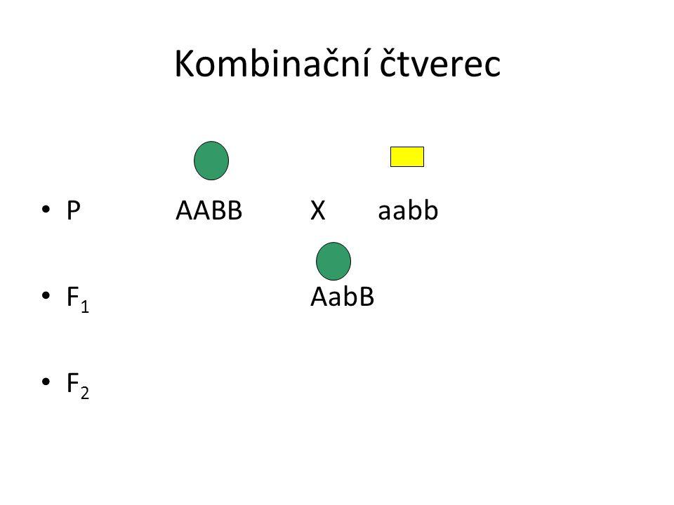 Kombinační čtverec PAABB Xaabb F 1 AabB F 2