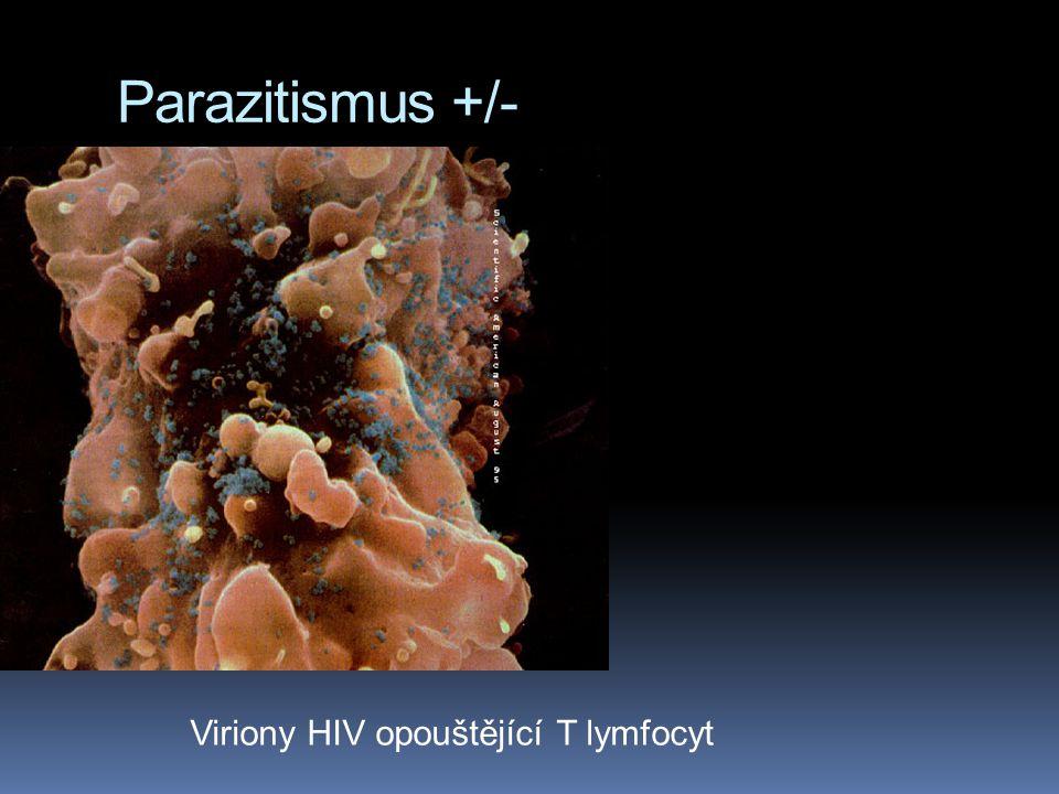 Parazitismus +/- Viriony HIV opouštějící T lymfocyt