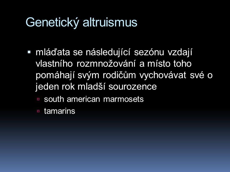 Genetický altruismus  mláďata se následující sezónu vzdají vlastního rozmnožování a místo toho pomáhají svým rodičům vychovávat své o jeden rok mladší sourozence  south american marmosets  tamarins