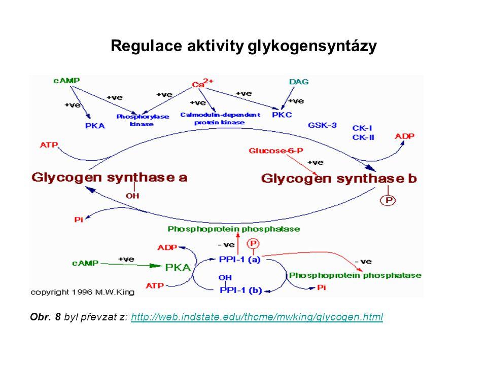 Regulace aktivity glykogensyntázy Obr. 8 byl převzat z: http://web.indstate.edu/thcme/mwking/glycogen.htmlhttp://web.indstate.edu/thcme/mwking/glycoge