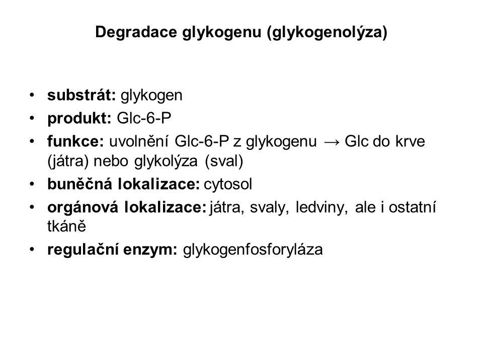 Degradace glykogenu (glykogenolýza) substrát: glykogen produkt: Glc-6-P funkce: uvolnění Glc-6-P z glykogenu → Glc do krve (játra) nebo glykolýza (sva