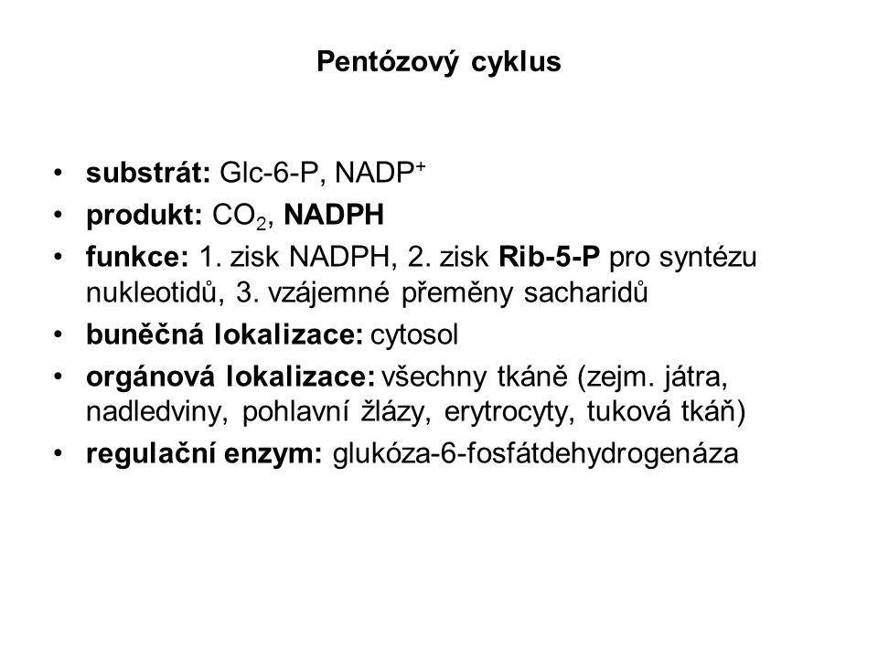 Pentózový cyklus substrát: Glc-6-P, NADP + produkt: CO 2, NADPH funkce: 1. zisk NADPH, 2. zisk Rib-5-P pro syntézu nukleotidů, 3. vzájemné přeměny sac