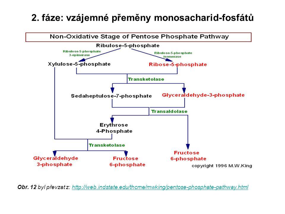 2. fáze: vzájemné přeměny monosacharid-fosfátů Obr. 12 byl převzat z: http://web.indstate.edu/thcme/mwking/pentose-phosphate-pathway.htmlhttp://web.in
