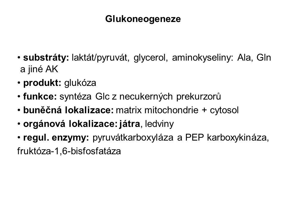 Glukoneogeneze substráty: laktát/pyruvát, glycerol, aminokyseliny: Ala, Gln a jiné AK produkt: glukóza funkce: syntéza Glc z necukerných prekurzorů bu