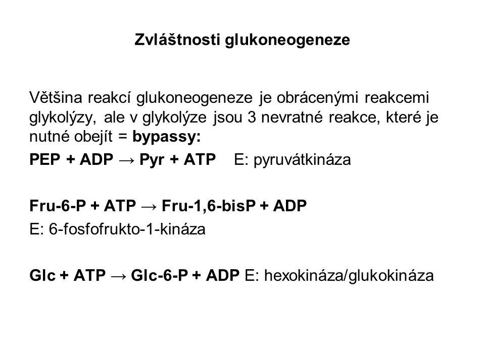 Zvláštnosti glukoneogeneze Většina reakcí glukoneogeneze je obrácenými reakcemi glykolýzy, ale v glykolýze jsou 3 nevratné reakce, které je nutné obej